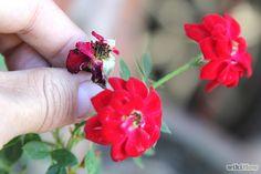 Imagem intitulada Care for Flowers Step 14