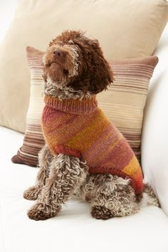 This puppy looks snazzy in its warm sweater knit with the variegated colors in 'Amazing' yarn.
