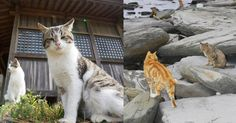 Japan's 'Cat Islands' Offer Friendly Feral Cats, But Mask A Serious Health Problem