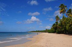 #Martinique plages des salines © Gil Giuglio