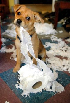 Δεν το έκανα εγώ!!!!!!