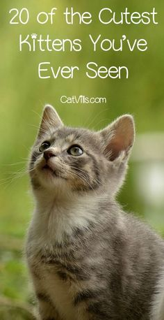 If these 20 sweeties aren�t the cutest kittens you�ve ever seen, then you may need an eye exam! Check them out to turn a rough day around fast!