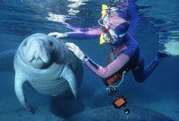 Swim with manatees!