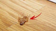 Nu este atât de simplu să ai o casă perfect organizată și curată, însă cum știm foarte bine că în casele murdare apar și insecte, parcă ne simțim mai motivați să facem curat… Azi, ți-am pregătit soluția minune, care pune pe fugă insectele. Ai nevoie de: – Jumătate de ceașcă de șampon – Jumătate ceașcă …