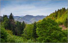 Ursula Di Chito - Schwarzwald-Panorama