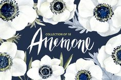 Watercolor anemone white flowers by WatercolorS on @creativemarket