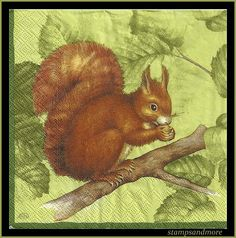 Squirrel Decoupage Paper Napkins   Use For by stampsandmore