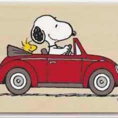 Snoopy. #adorable #Peanuts #DoYouRemember
