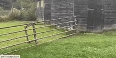 Dog jumping over a fence – Gif