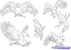 how to draw eagles, draw bald eagles step 5 Fly Drawing, Eagle Drawing, Wings Drawing, Bird Drawings, Animal Drawings, Sketchbook Drawings, Eagle Sketch, Penguin Drawing, Eagle Pictures