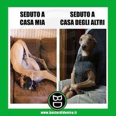 Tagga i tuoi amici e #condividi #bastardidentro #cane #educazione www.bastardidentro.it