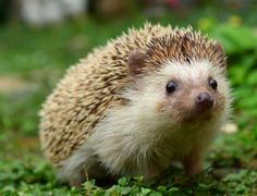 Can't hedge, I'm a hog! - Nothing At All