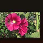 FredericM Portugal (@fredericm.pt) • fotos e vídeos do Instagram Portugal, Plants, Instagram, Plant, Planets