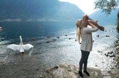 Swans at Lake como, Italy