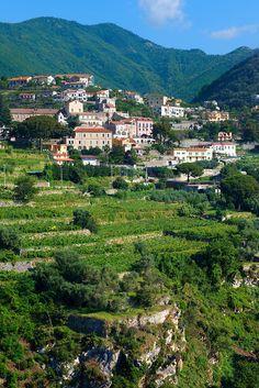 Vineyards near Ravello, Italy, province of Salerno Campania   Amalfi Coast copyright: Paul_Williams. All rights reserved