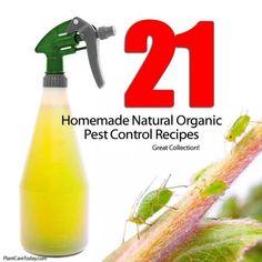 21 Homemade Natural Organic Pest Control Recipes: -