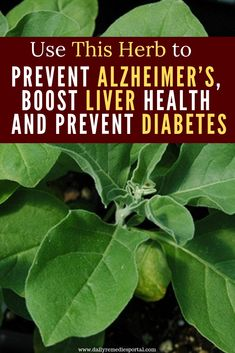 Use This Herb to Prevent Alzheimer's, Boost Liver Health and Prevent Diabetes