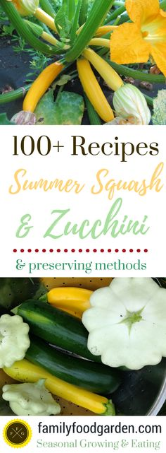 100+ Savory & Sweet Zucchini and Summer Squash Recipes