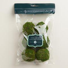 Moss Ball Vase Fillers, 6-Pack | World Market