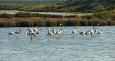 Algarve Nature Week evento de animação e promoção turística | Algarlife