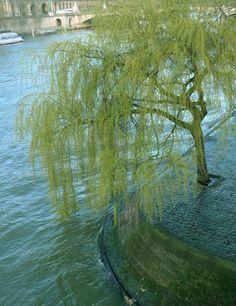 tree is life essay