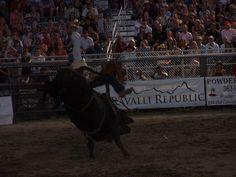 Bull a Rama