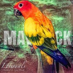 Maverick the Parrot (@MaverickParrot) | Twitter