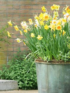 Bulbs Going to dig out bulbs in our yard - we should re-use them in pots for the porch! Some good ideas here for containers and plant combinations. - How to create pots of your favorite spring bulbs in an afternoon. Container Flowers, Container Plants, Container Gardening, Gardening Tips, Plant Containers, Vegetable Gardening, Organic Gardening, Gardening Scissors, Metal Containers