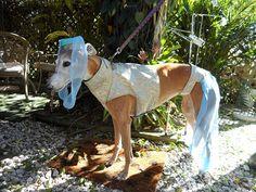 Greyhound Genie Costume by AGreytWaytoGo on Etsy, $40.00