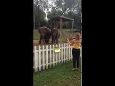 Elefantes bailan a ritmo de violín