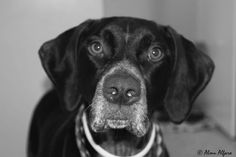 Mi perro tiene un Blog ! : Me canso... (sobre el abandono)