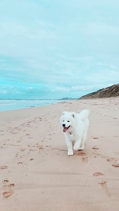 Outstanding Beautiful dogs information are readily available on our internet sit… - Welpen Cute Baby Animals, Animals And Pets, Funny Animals, Cute Dogs And Puppies, Big Dogs, Doggies, Cute Dog Wallpaper, Puppy Wallpaper Iphone, Samoyed Dogs