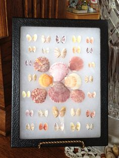 More coquinas and small scallops from Sanibel. Seashell Display, Seashell Art, Seashell Crafts, Beach Crafts, Seashell Projects, Driftwood Crafts, Sanibel Island Shells, Sea Shells, New Crafts