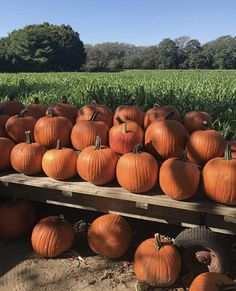 It's that time of year again!! Pike Farms in Sagaponack, NY