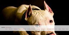 SASK-9 | Dog-training