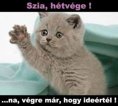 Image of grumpy cat memes clean funny 46 super funny grumpy cat Best Cat Memes, Cute Cat Memes, Funny Animal Memes, Funny Cat Videos, Animal Quotes, Funny Cats, Funny Animals, Cute Animals, Memes Humor