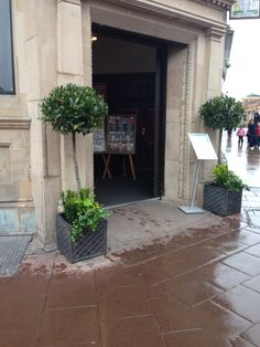 'Make an entrance' with Bay Trees!