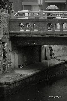 東京猫色    : 雨宿り