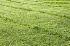 Tondre, arroser, passer le rouleau et le balai, supprimer les mauvaises herbes : les 10 étapes d'entretien pour un gazon superbe.