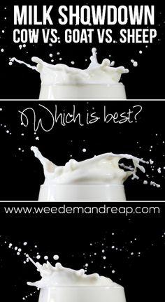 Milk Showdown: Cow vs. Sheep vs. Goat - Which is best?