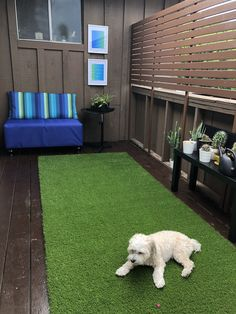Another lifeless balcony transformed into a cozy place for everyone, including fur babies! #engineeryourspace inspired