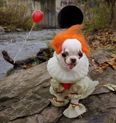 In IT the clown was actually supposed to be played by a Chihuahua. Unfortunately this was later recast to a human as the Chihuahua didn't speak English and it was difficult to convey plot lines. Baby Animals, Funny Animals, Cute Animals, Funny Horror, Horror Movies, Pet Costumes, Halloween Costumes, Halloween Decorations, Scary Dogs