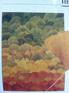 Gerd Verschoor's ginko leaf collage.  To copy: at the height of fall, gather the most beautiful leaves of varying colors and press them in a thick book for 10 days.  Starting at the top, glue leaves on a piece of glass, one over the other, with a clear resin adhesive. Try ginko leaves, maple, birch, money leaves, eucalyptus, grasses or even shafts of wheat.  Leave unframed so texture & color is displayed