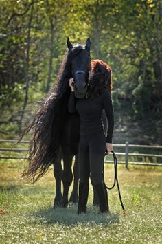 """In Human Arms"" Frederik the Great, Friesian Stallion"