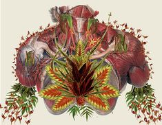 Anatomical Collage Art by Travis Bedel