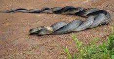 Resultado de imagen para  fotografia de serpientes
