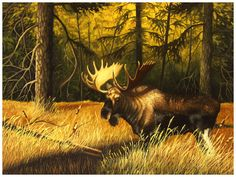 """"""" The Bull """"  moose    by Bill Langis"""