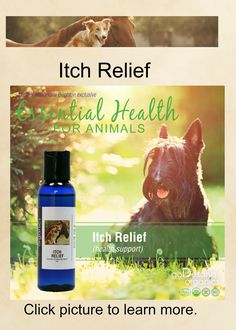 Just like us, dogs can get itchy skin which can originate from many different causes. Diet can be the cause of most dogs' itchy skin: remove wheat, soy, corn, and other known allergens from your dogs diet. Insect bites can also create itchy spots that annoy your animal. Stress is also known to cause itching as well as pain. Reduce the stress you can in your dog's environment and watch your own stress as your dog will be mirroring that back to you. Seek veterinary advice if itching continues