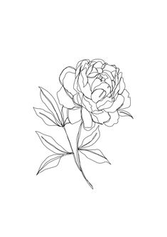 Botanical Illustration Line Drawing - Peony Graphic T-shirt by The Colour Study - Tri-Grey - MEDIUM - Womens Fitted Tee Flash Art, Peonies Wallpaper, Peony Drawing, Peony Painting, Peony Illustration, Zealand Tattoo, Peony Print, Color Studies, Line Art