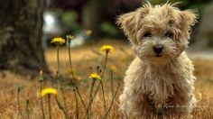 Puppy In Movement by rekam brestek, via 500px